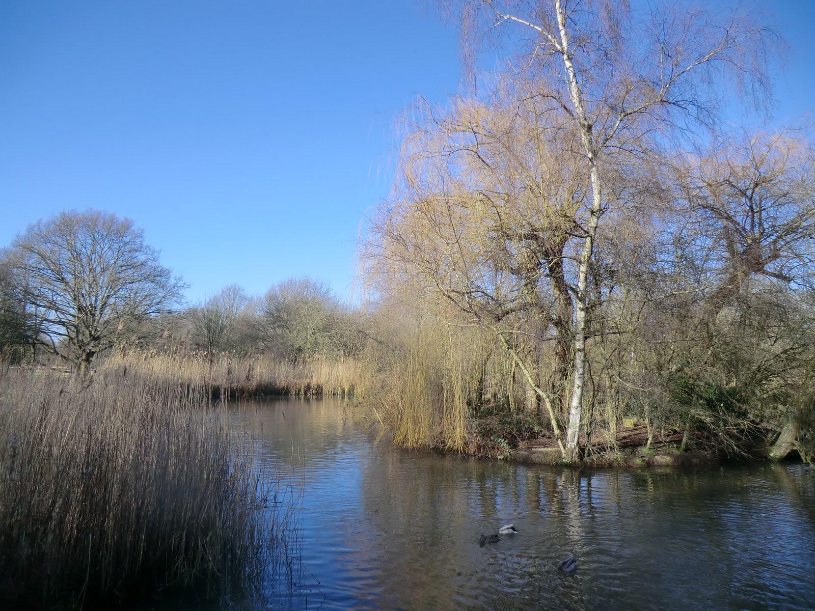 CIMG2450 Peg's Pond, Isabella Plantation