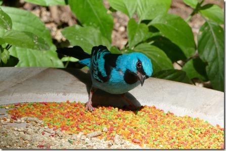 hart_miejers_park_bird4