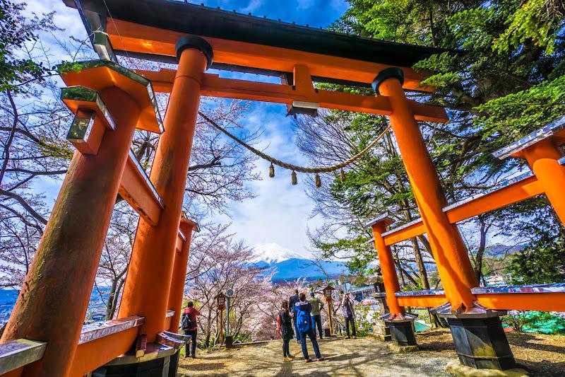 新倉富士浅間神社 桜 写真5