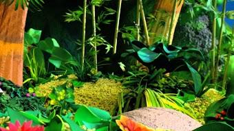 Jungle Campout
