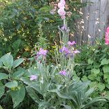 Gardening 2012 - IMG_2887.JPG