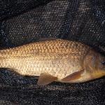 20140517_Fishing_Bochanytsia_027.jpg