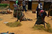 Pro představu sklizeň rýže po konžsku - i ta tvoří důležitou součást jídelníčku. (Foto: Marcela Janáčková, ČvT)