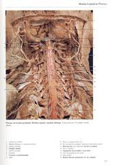 225 Medula Espinal no Pesco_o