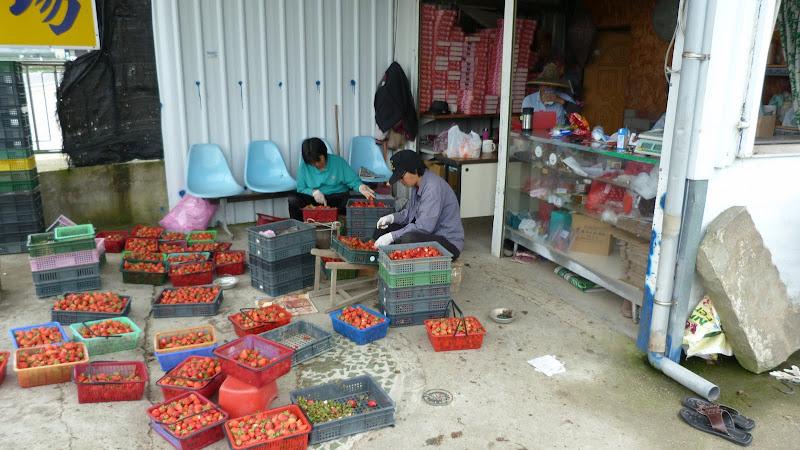 TAIWAN  Miaoli county,proche de Taufen - P1130188.JPG