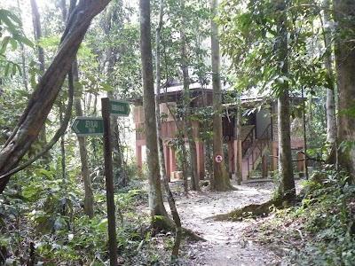 ジャングルの中のブンブンブラウ
