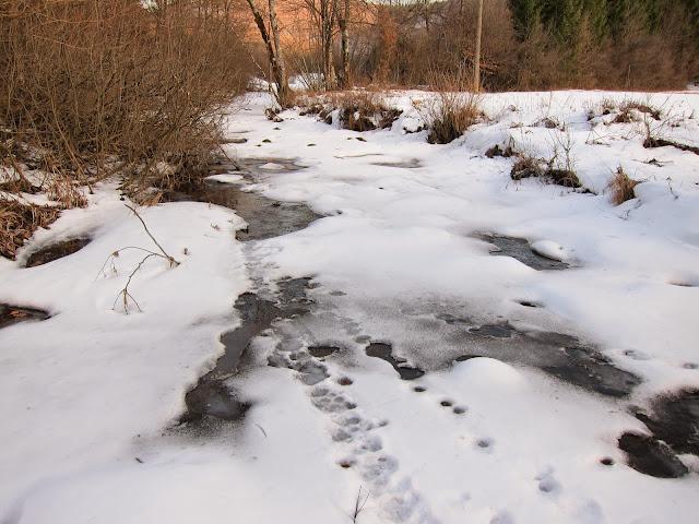 Zima-winter - IMG_0071.jpg