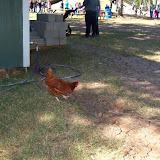 Blessington Farms - 116_5072.JPG
