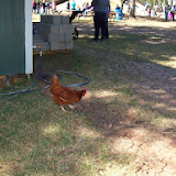 Blessington Farms - 116_5072.JPG