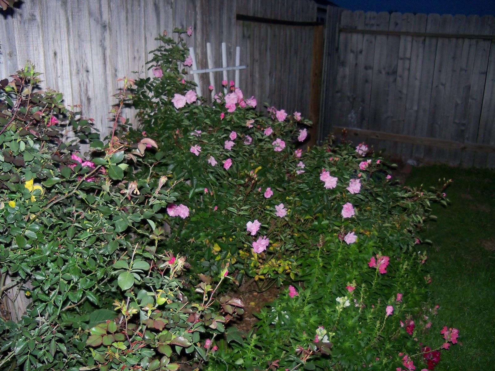 Gardening 2012 - 115_1212.JPG