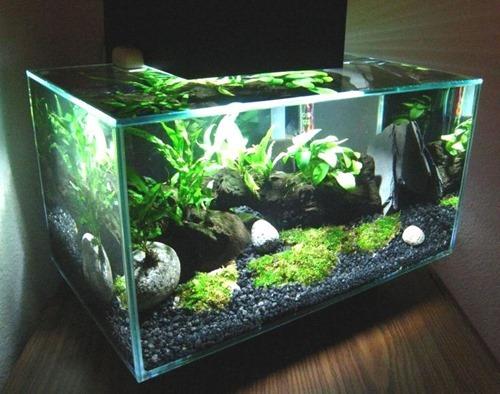 fluval-edge-6-gallon-fish-tank-01