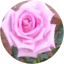 Rose Jain GVC