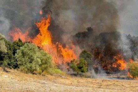 Μεγάλη φωτιά στη Σάμο - Επιχειρούν ισχυρές πυροσβεστικές δυνάμεις
