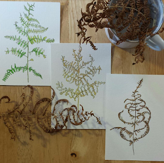 Bracken botanical illustrations by Alice Draws The Line