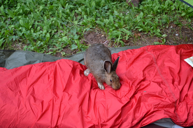 jackrabbit on my bivy sack