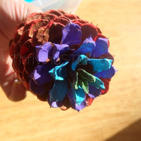 Beautiful Multiplication Pine Cone Craft