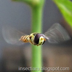 IMG_9607hovering
