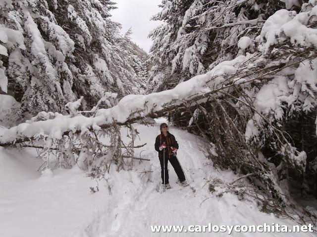 Muchas ramas caidas por el viento y peso de la nieve