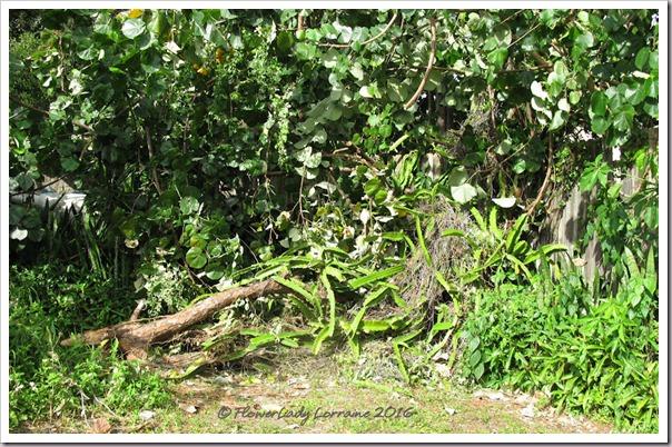 10-08-dead-pine-cactus4
