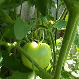 Gardening 2010, Part Three - 101_4434.JPG
