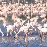 Kenia Lake Nakuru