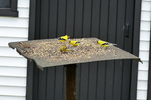 maud  et ses oiseaux 2011%252520P1030424