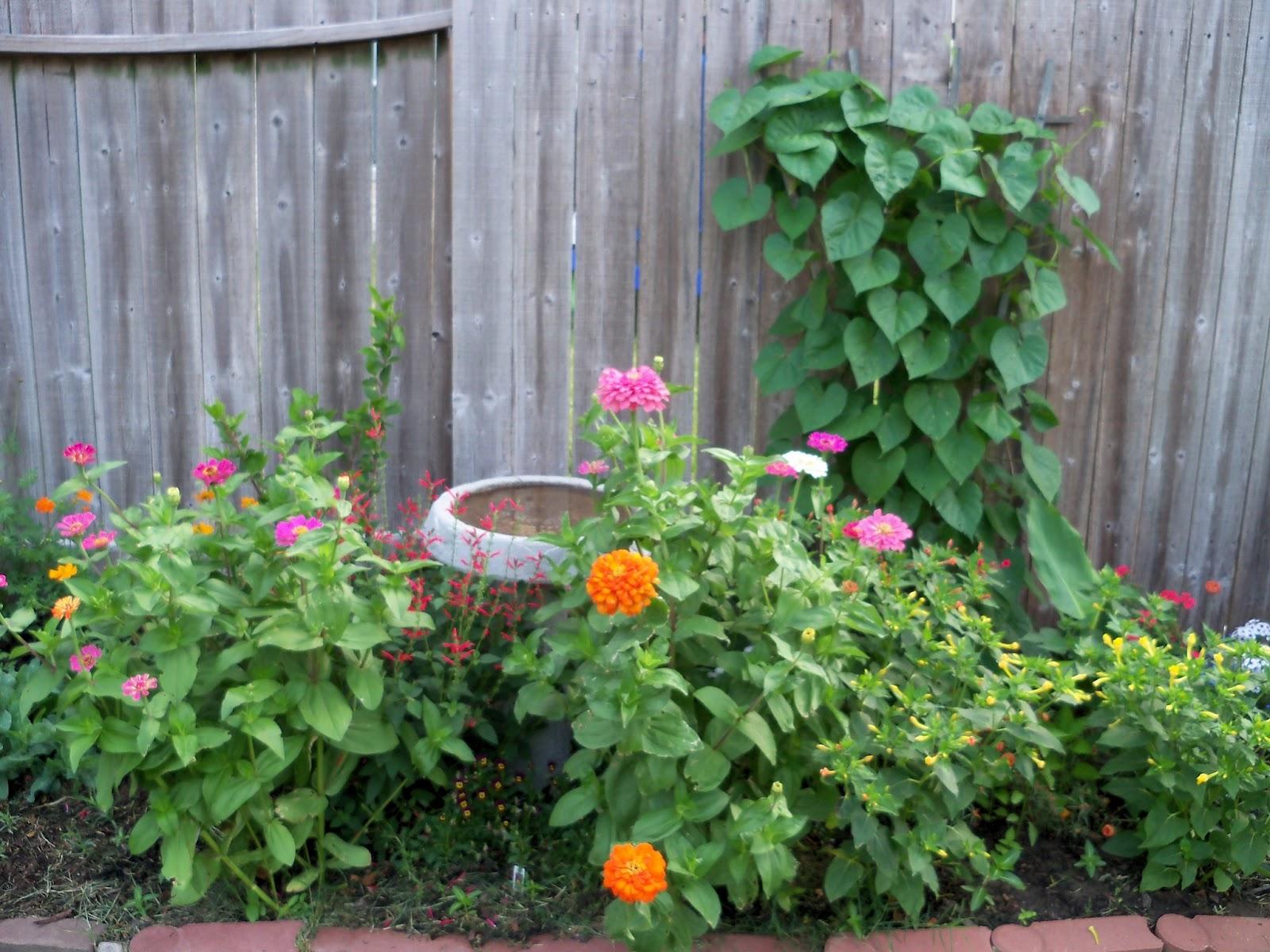 Gardening 2011 - 100_8191.JPG