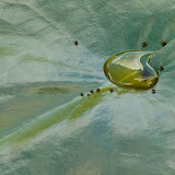 water-on-lilly-pad_MG_9053-copy.jpg