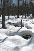 open springs in winter.jpg