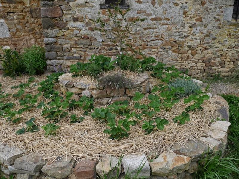 Un jardin en formation P1020908