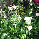 Gardening 2013 - IMG_20130413_110451.jpg
