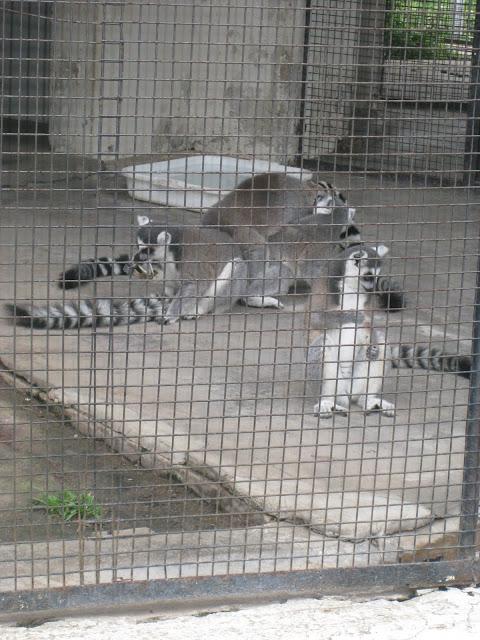 The lemurs were the best
