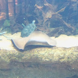 Houston Zoo - 116_8467.JPG