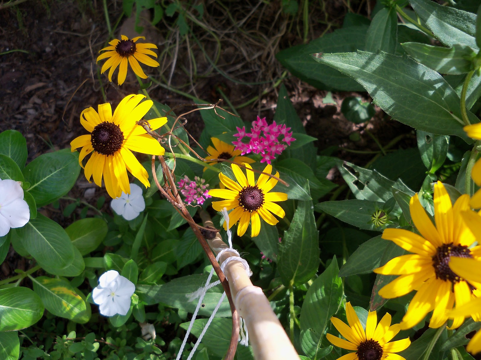 Gardening 2010, Part Three - 101_5200.JPG