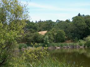 Arastradero Lake