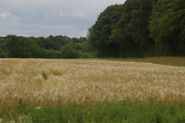 Les Hautes-Lisières (Rouvres, 28) par temps pluvieux, 20 juin 2011. Photo : J.-M. Gayman