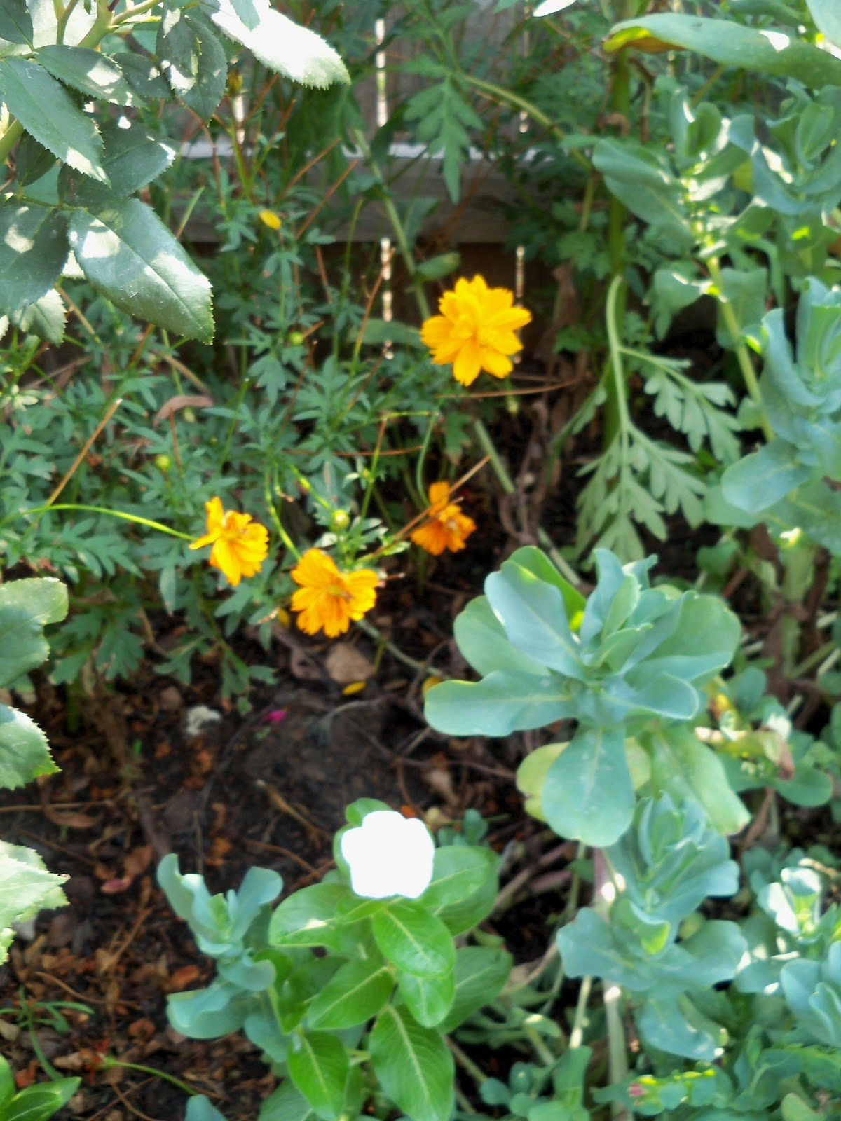 Gardening 2011 - 100_9343.JPG