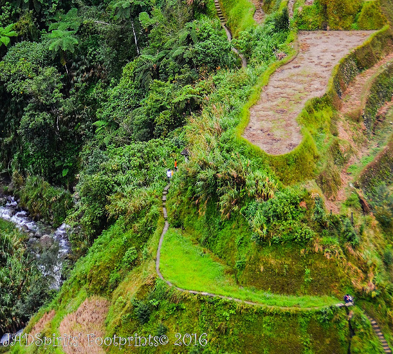 Closer shot of Banaue Rice Terraces with the steps and the trekkers