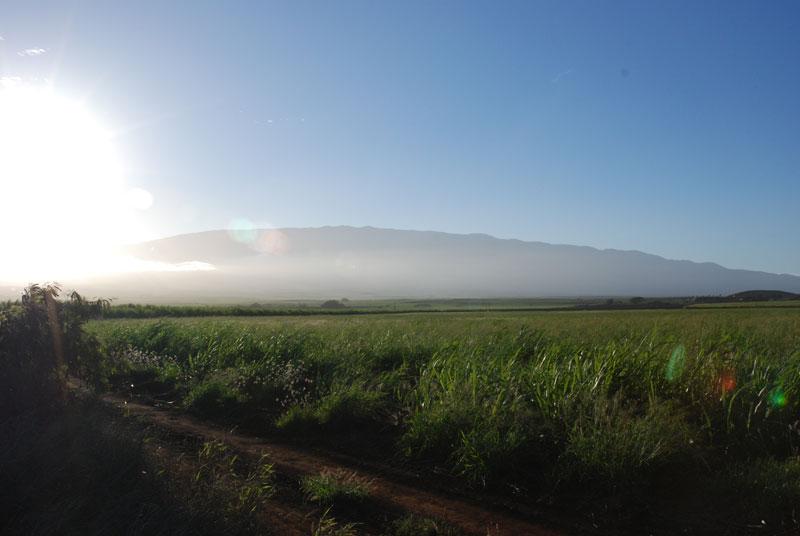 hawaii - 21.jpg