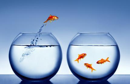 pesci e bocce