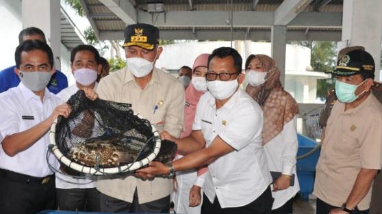 Gubernur Mahyeldi: Usaha Ikan Kerapu Sumbar Sangat Menjanjikan
