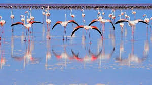 Türkiye'de flamingo cenneti olarak bilinen yer neresidir?
