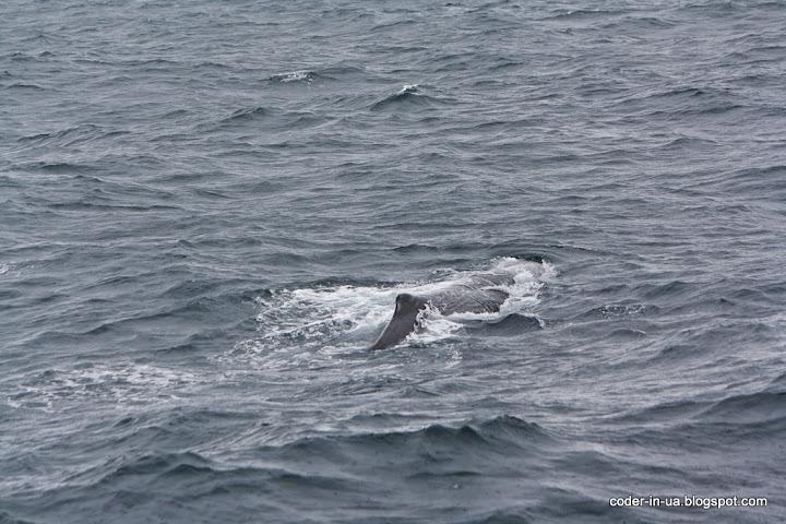 норвегия.анденес.китовое сафари