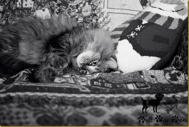 Matilda B&W January 14th (Copyright Jenny @ Bell Fur Zoo)