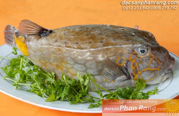 cá bò hòm