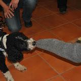 20111119VortragServicehunde