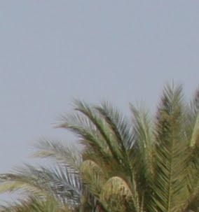 Egypte-2012 - IMG_4088.JPG