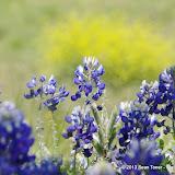 2013 Spring Flora & Fauna - IMGP6444.JPG