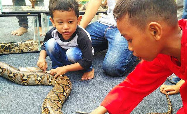 Waaw..  Abishar akrab dengan reptil