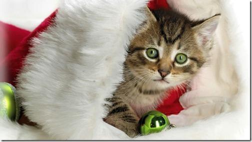 22 fotos de gats (12)